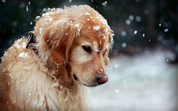 Dog Snowflakes Winter by HZR PICTURE