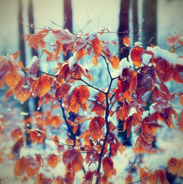 Winter Foliage by Rudolf Vlcek