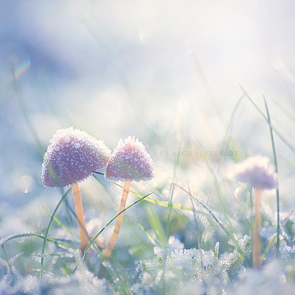 Hello winter by violetkitty92