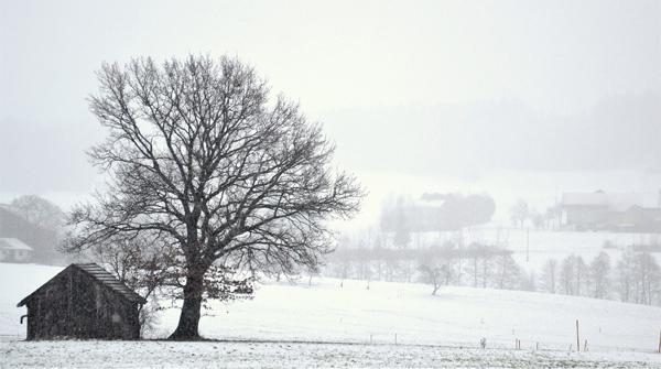 Winter by Thomas Riecken